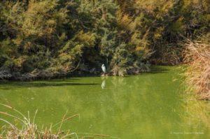 Nature setting in the Algarve